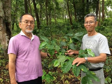 アイユーゴー事業タイコーヒー植栽現場(新田とソムヨッツ)